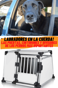 labrador on the road and dog gate